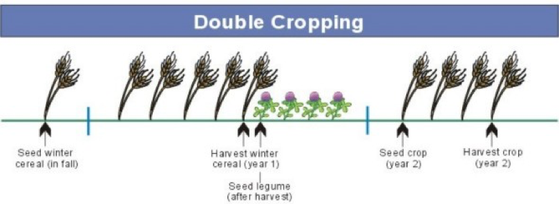Options For The Integration Of Green Manures Into Crop Rotation Image By Natural Systems Agriculture Lab